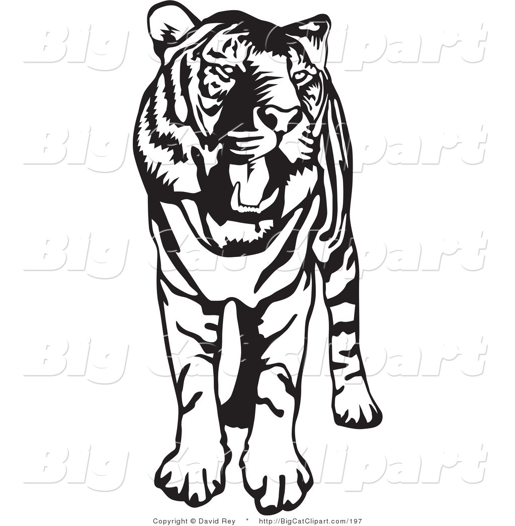 big cat vector clipart of a standing black and white tiger with its rh bigcatclipart com
