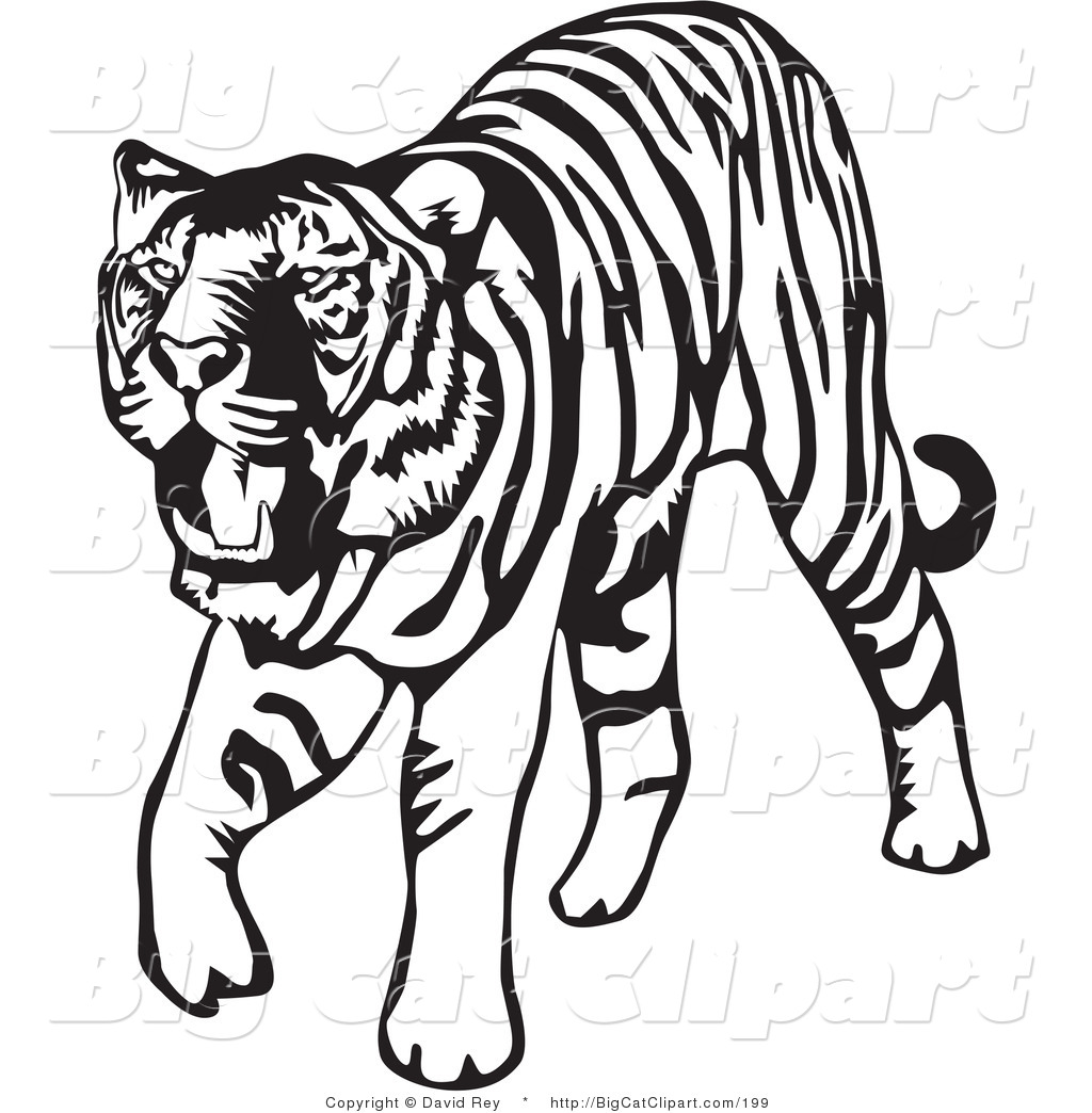 big cat vector clipart of a walking black and white tiger on white rh bigcatclipart com black white tiger clipart black white tiger clipart